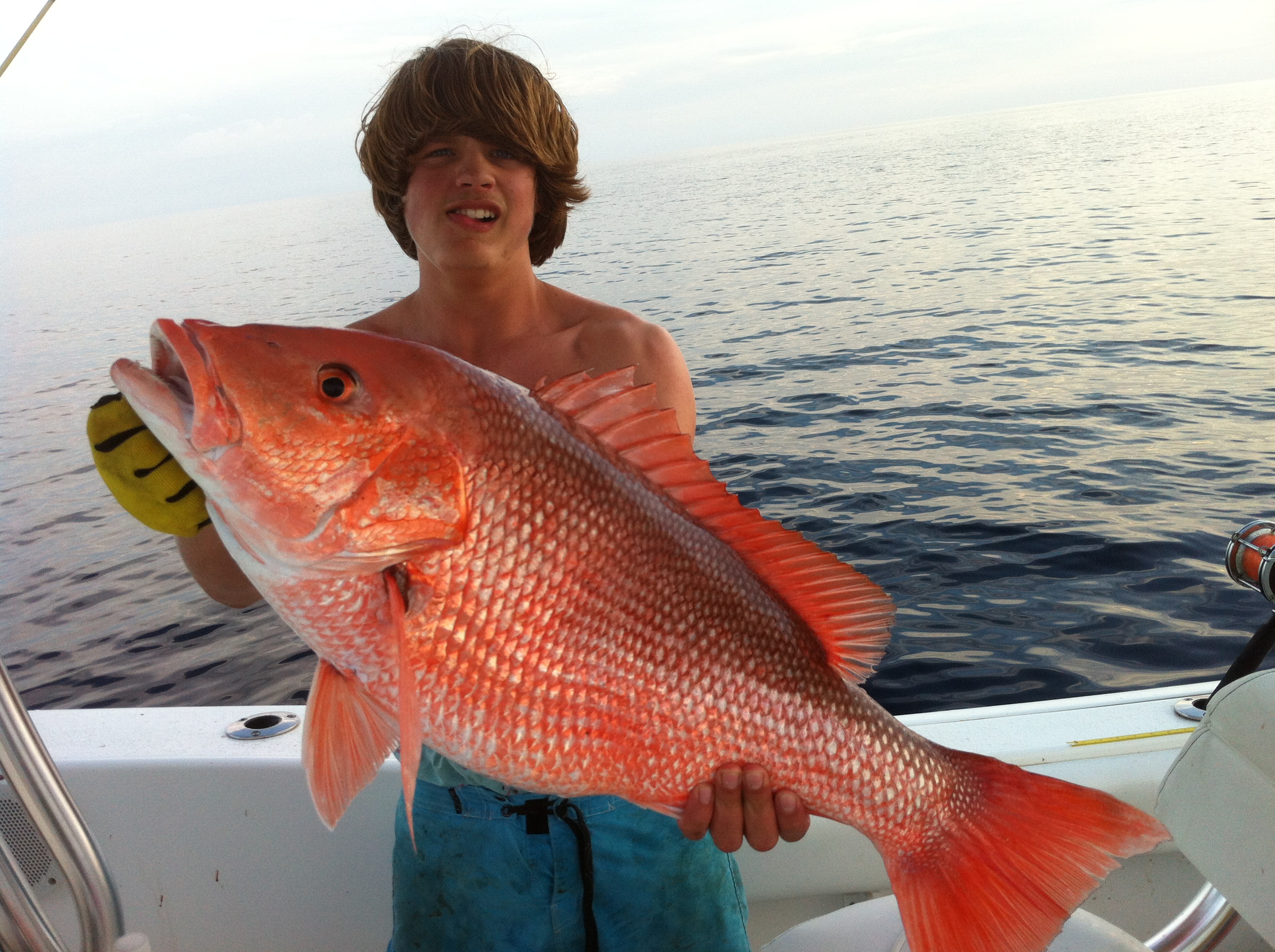 American red snapper key west shrimp company for Snapper fish florida